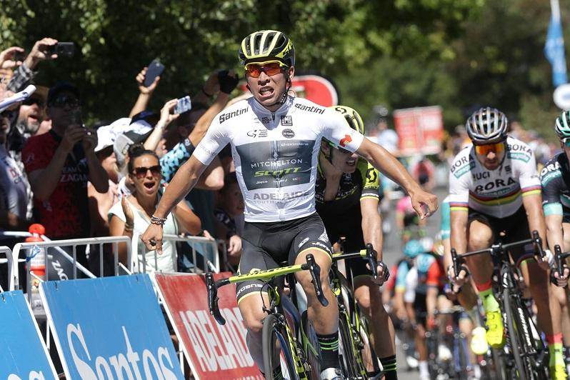 Caleb Ewan (Mitchelton-Scott) bejubelt seinen Sieg auf der 2. Etappe der Tour Down Under 2018 - Foto: © Santos Tour Down Under / Regallo